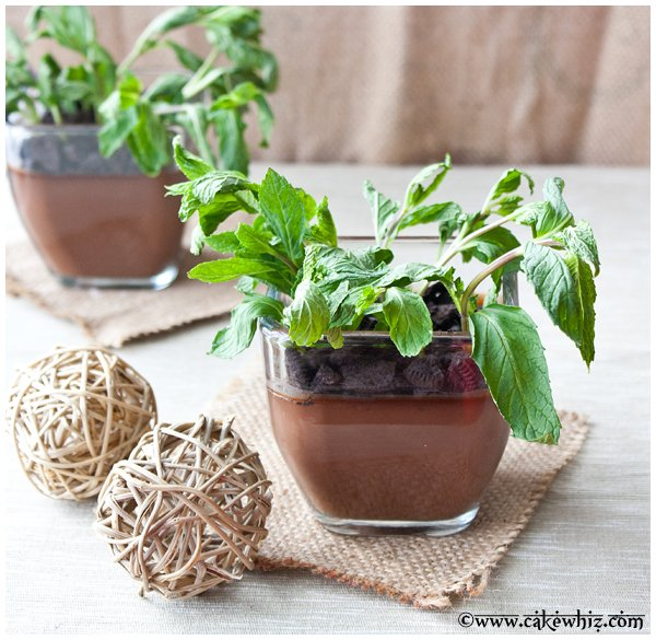 chocolate pudding potted plants 1