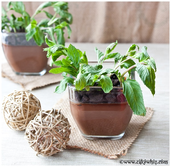 chocolate pudding potted plants